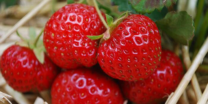 forside-jordbær